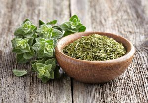 beneficios do oregano